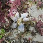 photo buoy barnacles