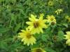September Bee